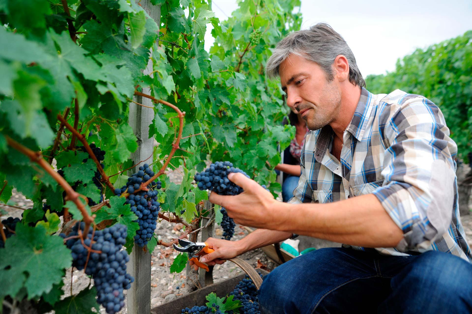 Assurer professionnels agricoles et viticoles Gard NOÉ Assurances Conseil